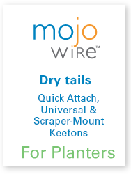 Mojos for Dry tails