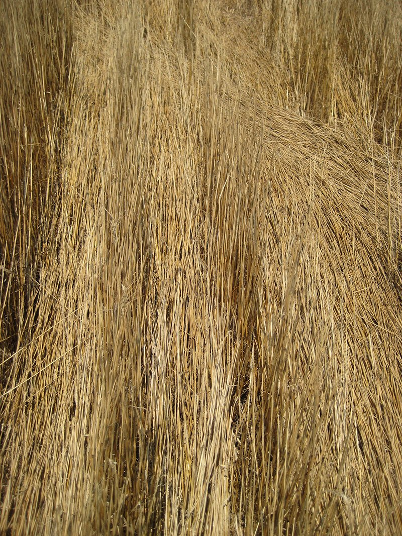 Shelbournes: The Value of Tall Stubble - Exapta Solutions